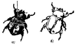 Способы металлизации растений, насекомых